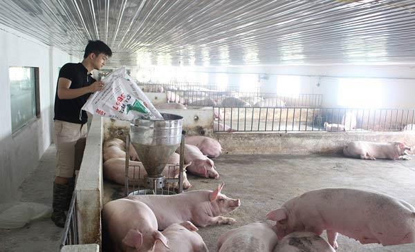 Cập nhật công nghệ ngành chăn nuôi từ chuyên gia